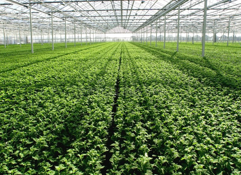 Since the beginning of the year, the government of the Primorye territory has allocated 23.4m RUB to support commercial greenhouses.
