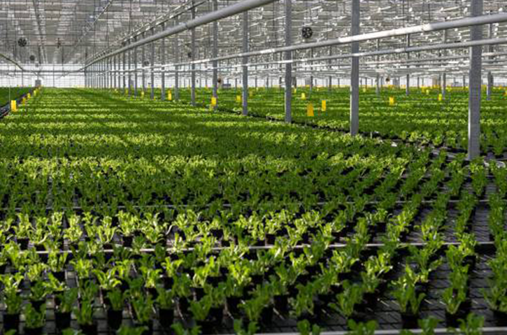 Agro Greenhouse complexes Russia - Official website The 4th